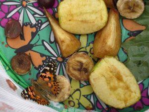 Schmetterling Futter