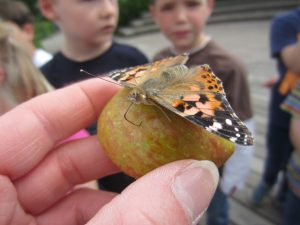 Schmetterling groß